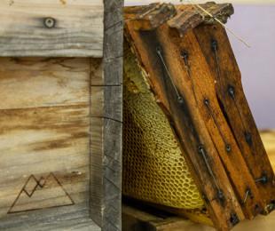 Die Honigernte hat begonnen